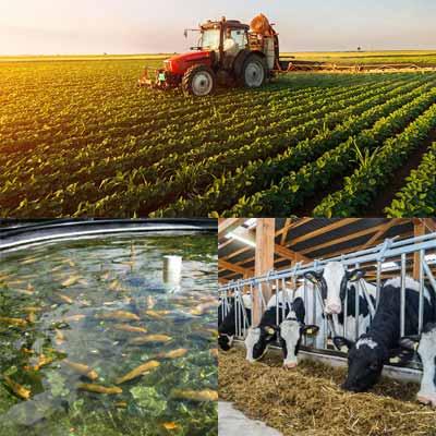 کشاورزی، دامپروری و آبزیان